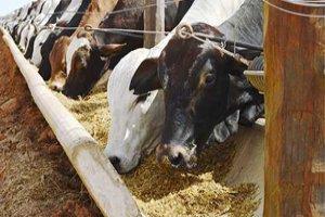 Alimentação e Suplementação de Bovinos