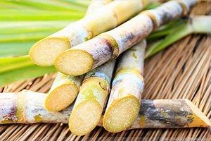 Controle de Qualidade da Cana-de-Açúcar como Matéria Prima
