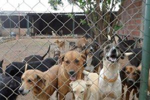 O Bem-Estar Animal em Abrigos