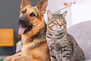 Diretrizes para a Vacinação de Cães e Gatos